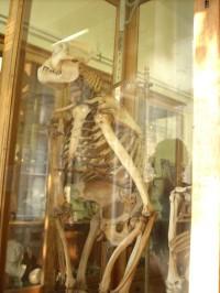 Muzeum člověka expozice