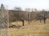 Třešně v Libeňské oboře