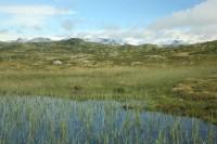 náhorní plošina Hardangervidda