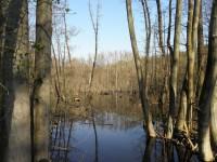 Lužní les - Mokrá-Horákov