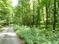 Lesy ve stoupání k rozcestí U Kříže - 27.5.2012