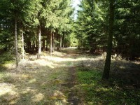 Pěkná lesní cesta kolem rybníku Vymyslíku - 6.5.2012