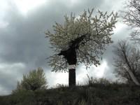 Jarný výlet ku kapličke sv. Anny v Brumově - Bylnici