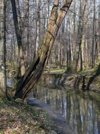Zpráchnivělý starý strom