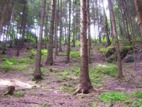 Jindřichov-les se skalisky na hradním vršku z východní strany-Foto:Ulrych Mir.