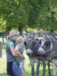 osli a děti - překrásný pohled:)