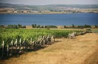 Stačí přivřít oči a představit si tu krásnou krajinu okolo Pálavských vrchů lemovanou vodní nádrží Nové Mlýny