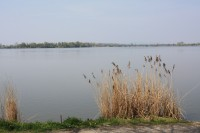 Rybník Vrkoč