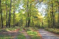 Většinou listnaté porosty v Bílovickém lese