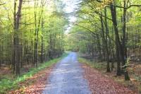 Hlavní lesní komunikace po hřebeni Bílovického lesa