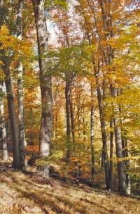 Jelení skok - přírodní rezervace