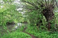 Ivanovický potok