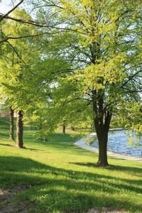 Parková úprava na břehu rybníka