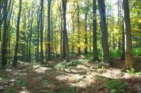 Pod Sýkořskou myslivnou - přírodní rezervace