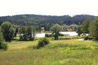 Jedovnice - mokřad na rybníku Olšovci