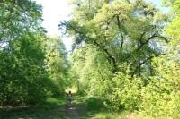 Lesní porosty v příbřežní části rybníků
