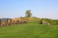 Dunajovická Růžová hora