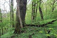 Krnovec - přírodní rezervace