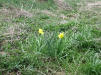 Jarní kvítky