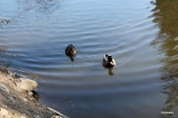 Dolnomlýnský rybník