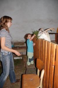 Mlsná koza Líza