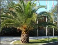 Příjezdová cesta k recepci kempu Molino a Fuoco. Popis cesty je cestopisu: https://sites.google.com/site/toskanskovroce2011/home