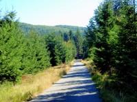 Lužické lesy