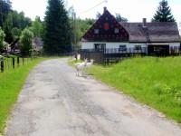Rousínov - Kozy na cestě