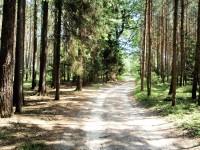 Mimoňské lesy