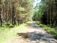 Mimoňské lesy 2