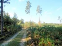 Les u Srní