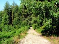 Cesta lesem od Vysoké hory