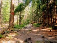 Cesta nad údolím