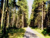 Les u Svoru