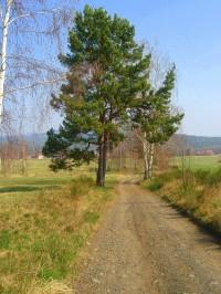 Cesta od Cvikova
