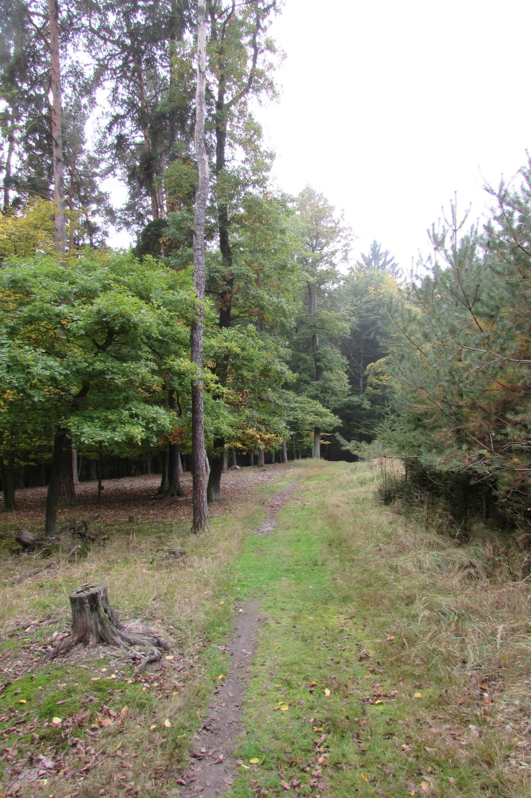Prirodni Rezervace Haj