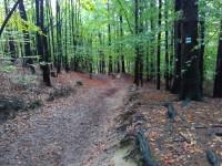 cesta do Vysoké Lípy u rozcestníku Ptačí kámen - odbočka