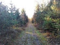 cesta lesem k rozhledně