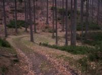 do údolí Koutského potoka