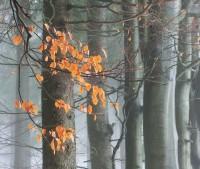 smíšené lesy v okolí