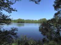 Velešický rybník