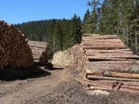 Vytěžené dřevo