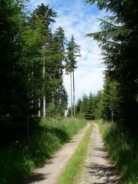 Kalovy, lesní cesta