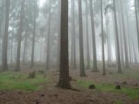 Les na svahu Stráže