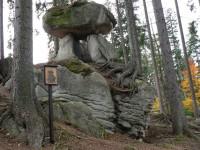 Medvědí stezka, kamenný hřib