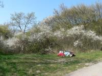 Květy a odpad