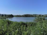 Panský- nezamyslický rybník východní část