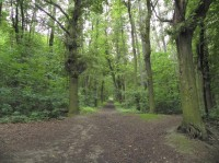Cesta lesem na Klatovské Hůrce