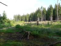 Javorná, lesní paseka