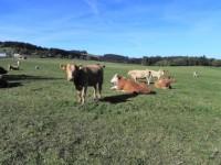 Pastvina u Zámyšle